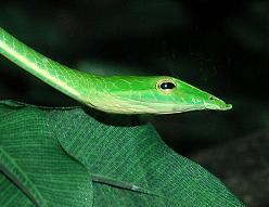 http://fc09.deviantart.net/fs71/f/2014/031/0/9/snake_by_shervivor-d74hlla.jpg