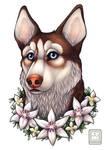 Husky Lady