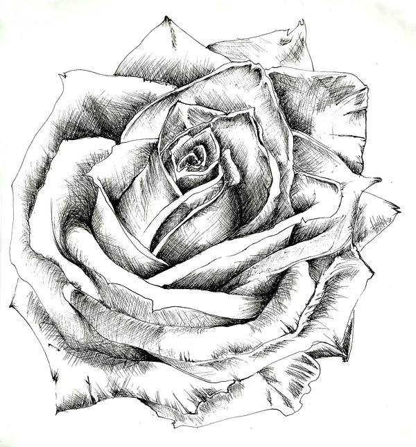 Achurrado, Técnica de Dibujo/Sombreado Rosa_by_k_tarsis-d497goc