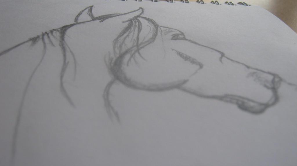 Horse Drawing by Nalarules