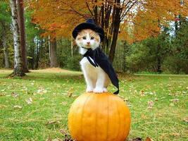 Halloween Cat :3