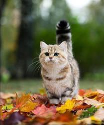Atumn Cat ^.^