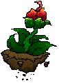 plantus venus by pixel-o-matic