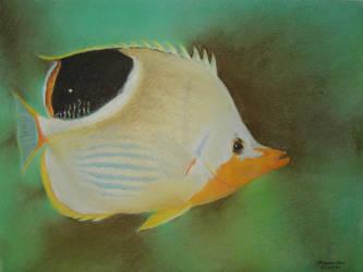 Flat Fish by baileymcdoogle