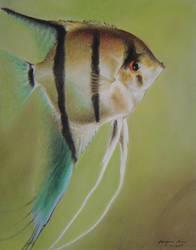 Fish by baileymcdoogle