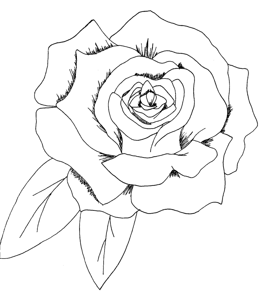Simple Line Art Rose : Commission a simple rose by saribrum on deviantart