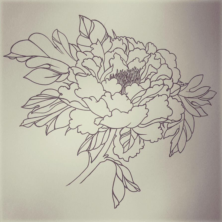Peony Flower Outline Viewing Gallery