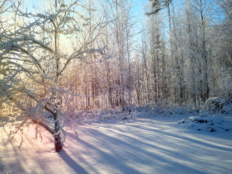 Backyard wonderland. by Kisse-san