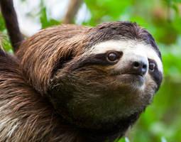 The Sloth by Waya37