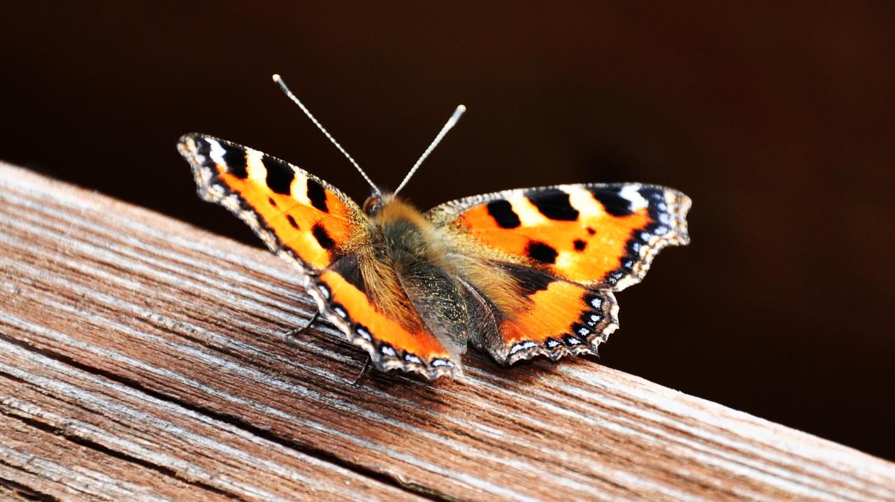 orange butterfly by my-little-photoworld