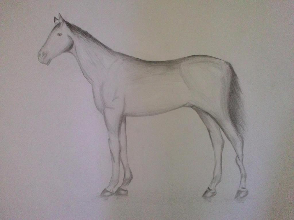 84 Gambar Arsiran Kuda Terlihat Keren Infobaru