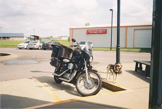 mooks at a Harley dealership