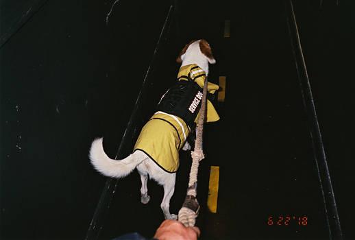 mooks yellow rainjacket