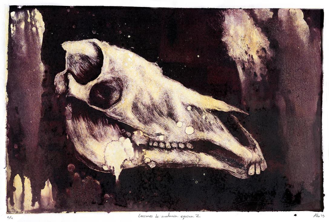 Lecciones de anatomia equina 2 by maledictus