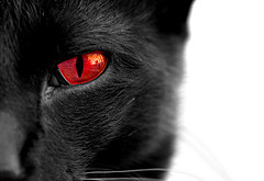 Black Cat With Red Eyes by OnlyAngel55