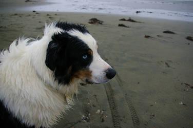 Salty Dog by Phobia-Phobia