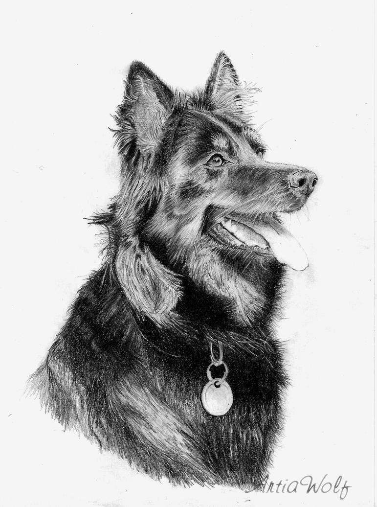 Chodsky pes Kony by ArtiaWolf
