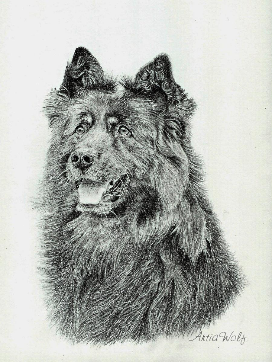 Chodsky pes Orin by ArtiaWolf