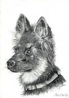 Puppy by ArtiaWolf