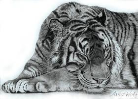 Sleeping tyger by ArtiaWolf