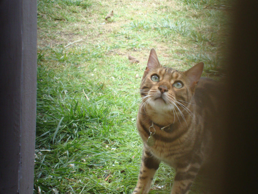 Cat by iiibrokeyhu