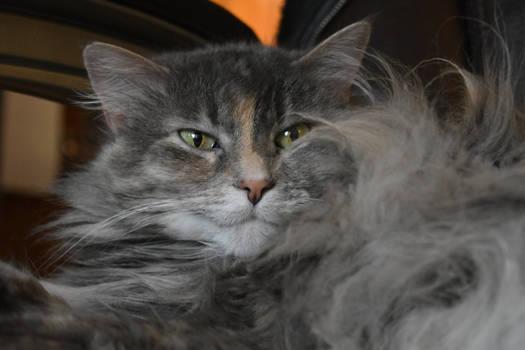 Kiki... Hiding in My Own Fur...