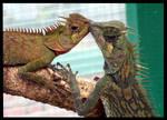 Reptilian Love by bernizzle