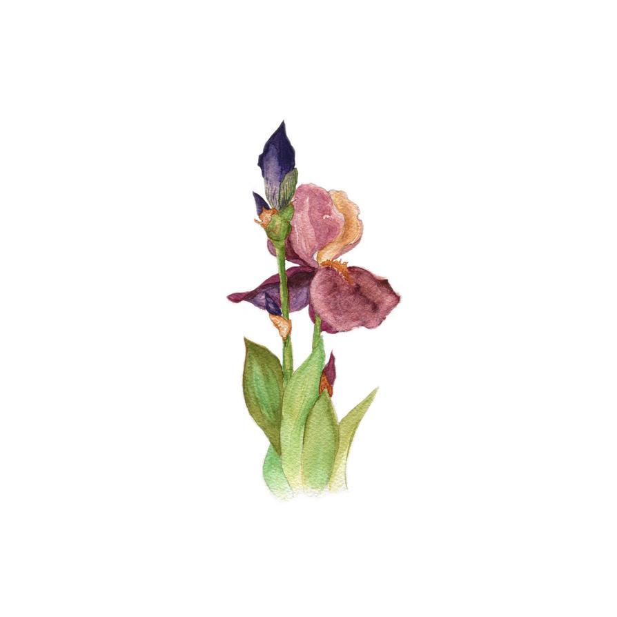 Flower by someowlsarenot