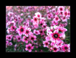 + Shades of Pink