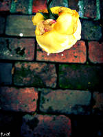 + Rose on Brick by silentglaive