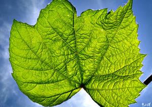 + Basking Leaf