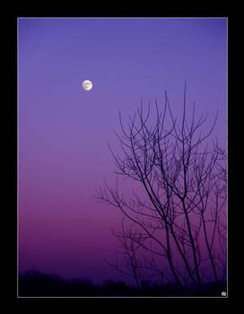 + The Moon