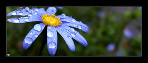 + Droplets by silentglaive