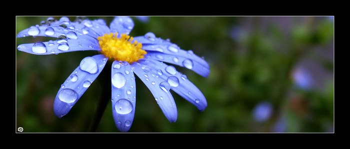 + Droplets