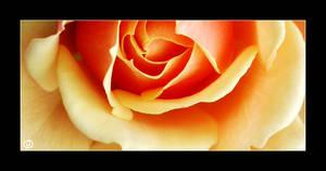 + Soft petals