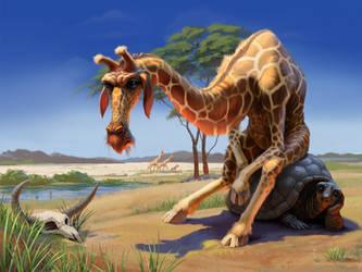 old giraffe