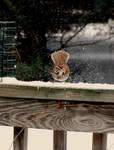 The Scary Sparrow