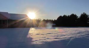 Snowy Yard: Dec 12th