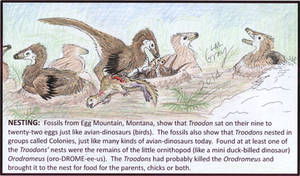 Troodon Project - Nesting