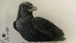 Microraptor Raven WIP