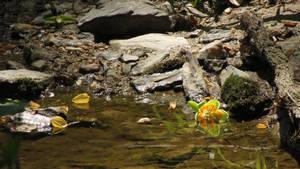 Yellow Leaves, Orange-Green Flower