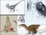 Feathered Drawings