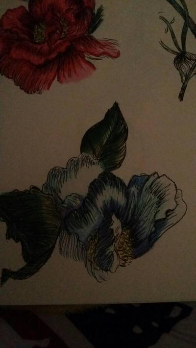 flowers  close ups  by NeverShoutPanda
