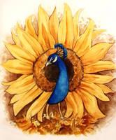 Sunbird by Diaris