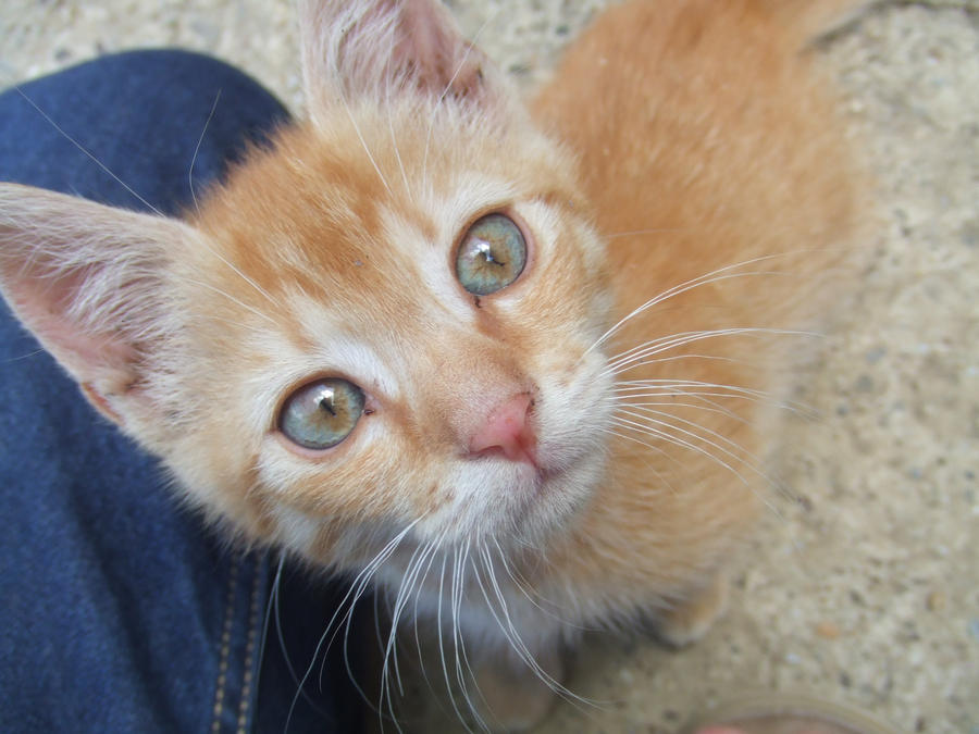 A Cat's Clear Eyes by Soulnova