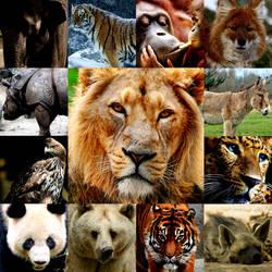 Asiatic Animal Kingdom - Reclaim the throne by Legend-tony980