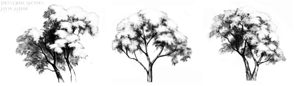 Trees digital pencil sketches by aliciane