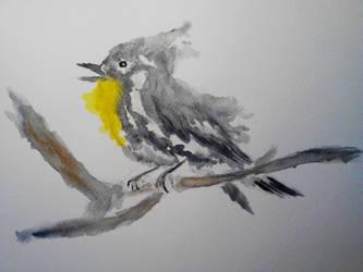 Yellow Throated Warbler by mayIdrawyou