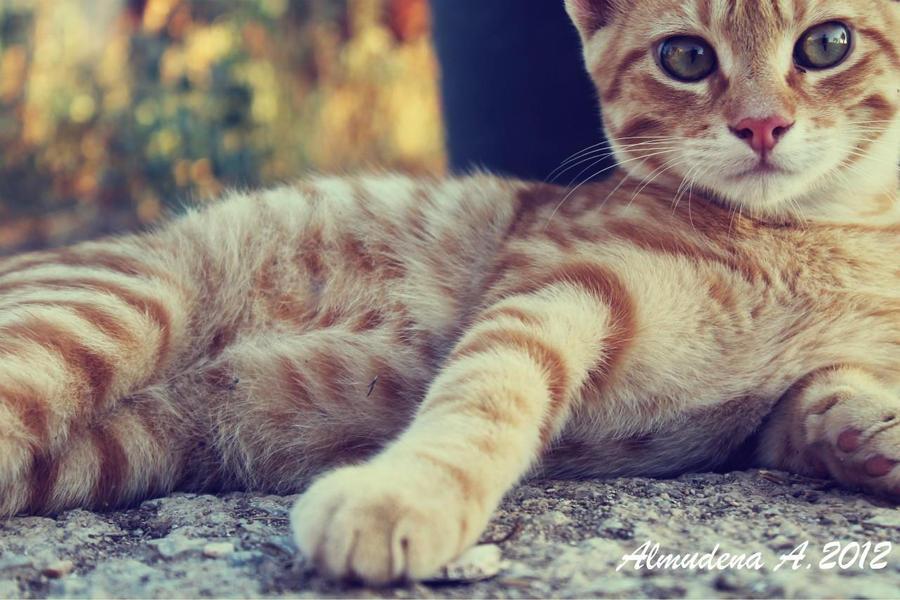 Catt by equusalmuh