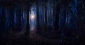 Dark Woods by renanrdgs